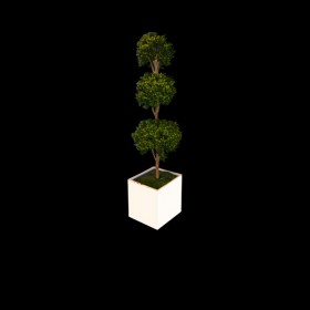 Tall Topiary