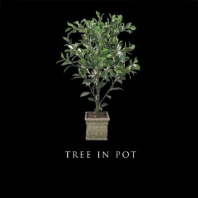 Tree in a Pot