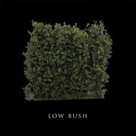 Low Bush