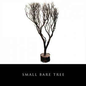 Small Bare Tree