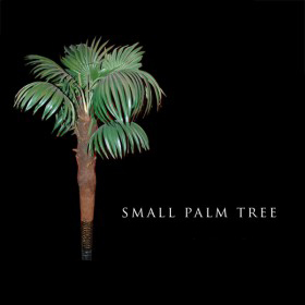 Small Palm Tree