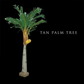 Tan Palm Tree