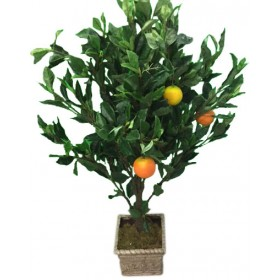 Small Orange Tree in Planter